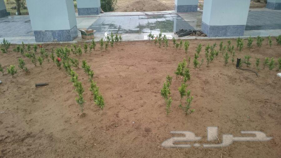 مهندس زراعي سوري محمود