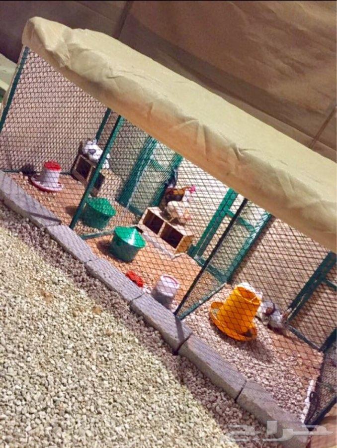 مخيم للأيجار مكيف بالكامل وأسعار مناسبه