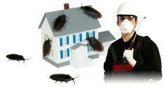 شركة مكافحة حشرات بالمدينة المنورة