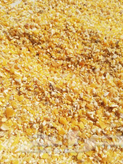 ذرة صفراء للبيع  432x576-1_-FzdSVnymzOCTSj