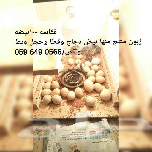 فقاسه فقاسات كل أنواع البيض بأسعار منافسه