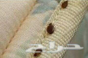 مكافحة حشرات رش مبيدات تنظيف عزل خزانات واسطح