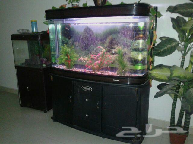 حوض سمك حجم كبير