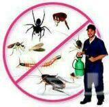 شركة غسيل شقق ومكافحة حشرات بالمدينة المنورة