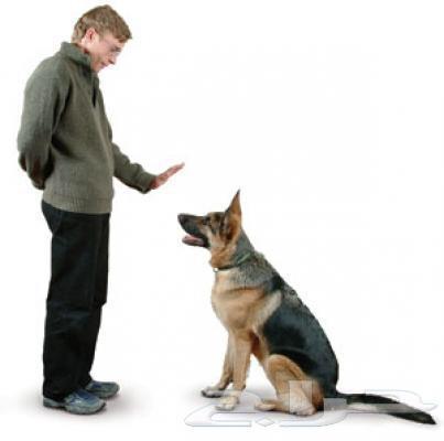 تدريب وترويض حيوانات