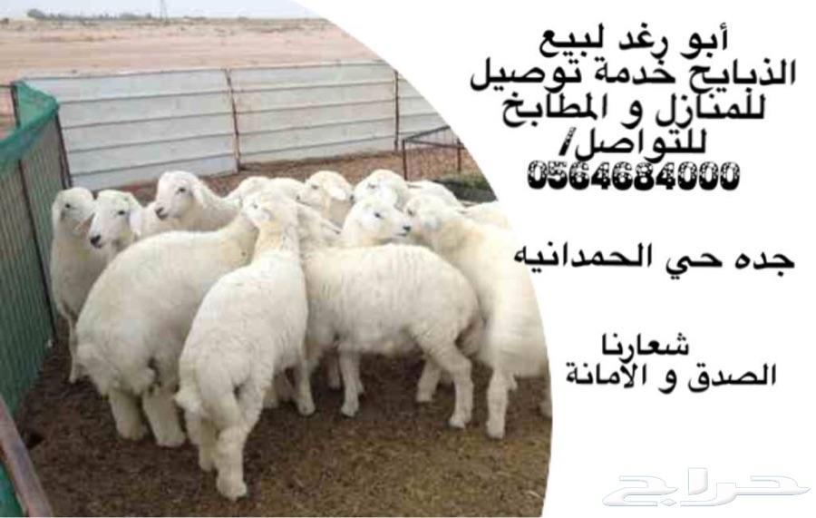 طليان ورخال حرية للمناسبات والثلاجة شرط