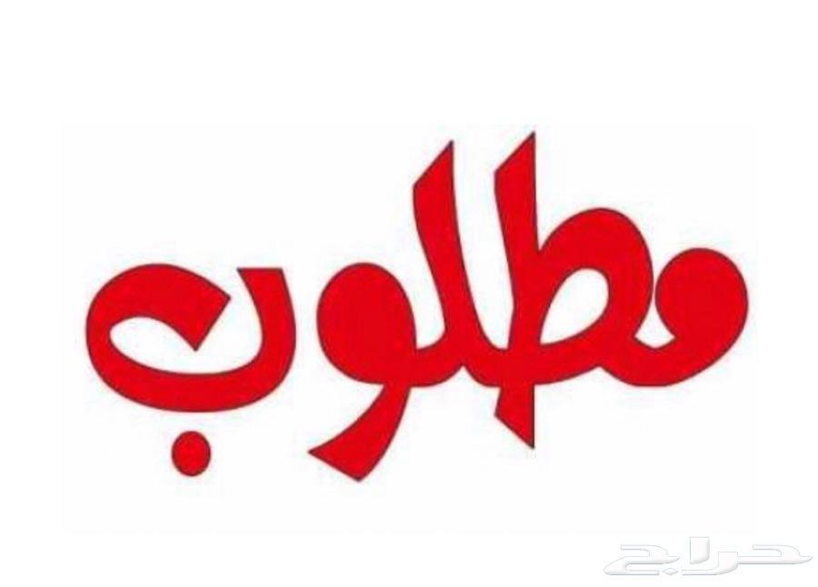 الشرقيه -   دينا ايسوزو
