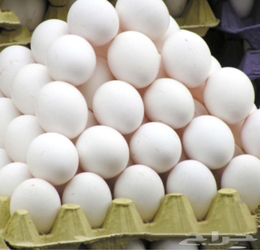 بيض فيومي مخصب ( ملقح )