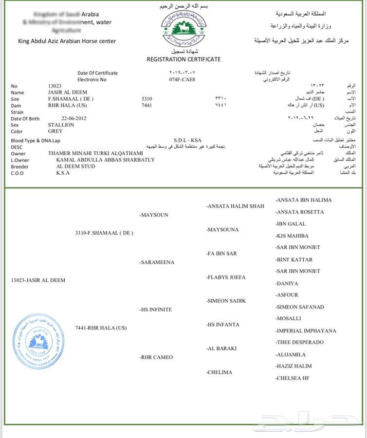 فحل واهو مصري شيخ
