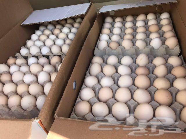 بيض دجاج بلدي مخصب وفيه فيومي