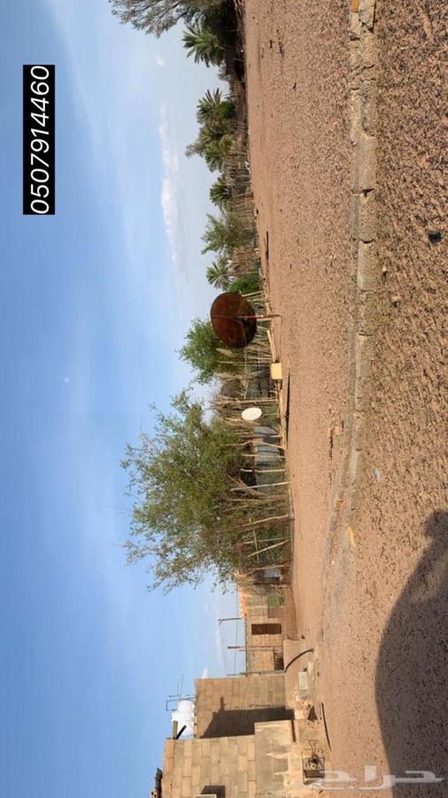 مزرعة في الرويضة حول القويعية ب 60 كم