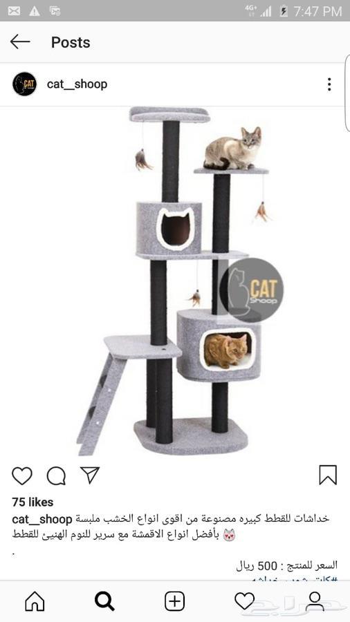 منتجات القطط