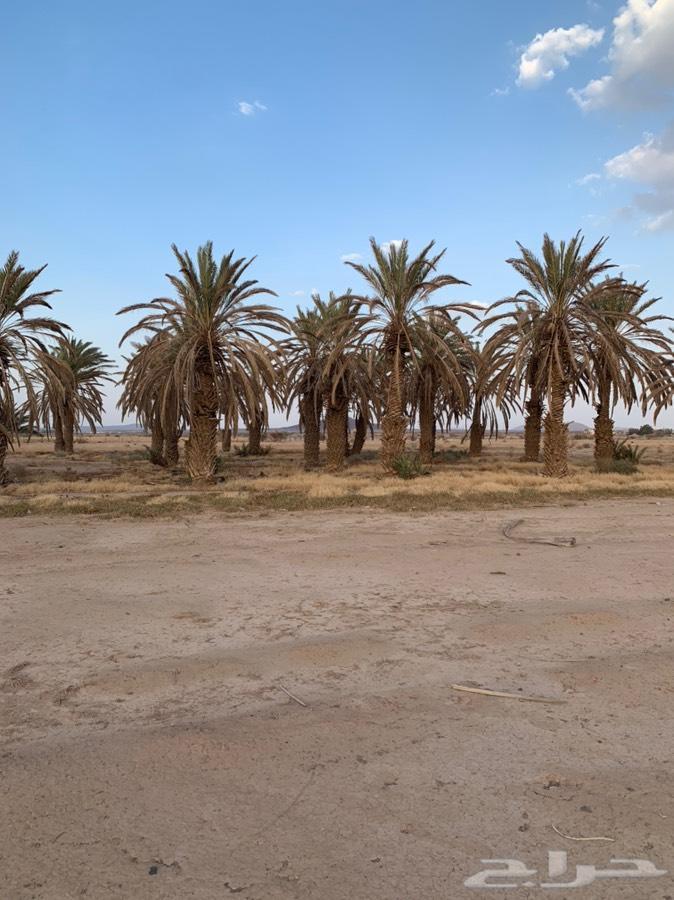 للبيع مزرعه شمال الطايف قريب ام الدوم