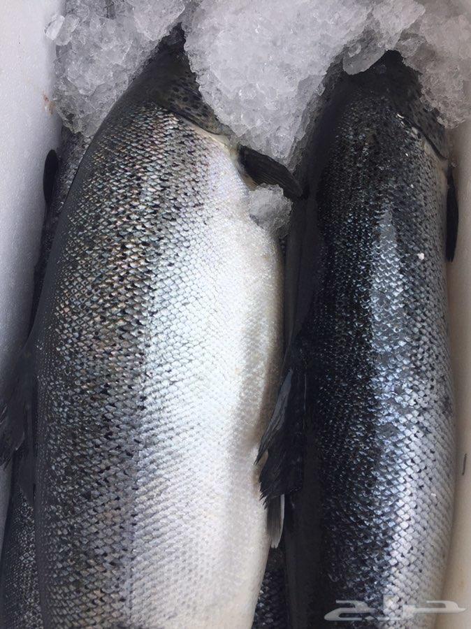 أسماك وربيان طازج