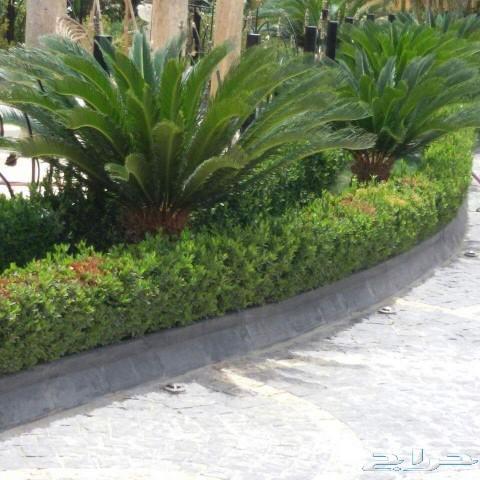 مزارع النخيل وتنسيق الحدائق