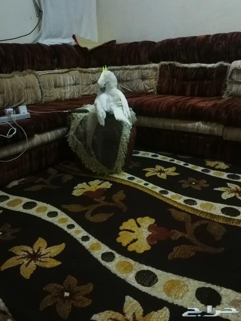 مجلس كنب وغرفه نوم للبيع