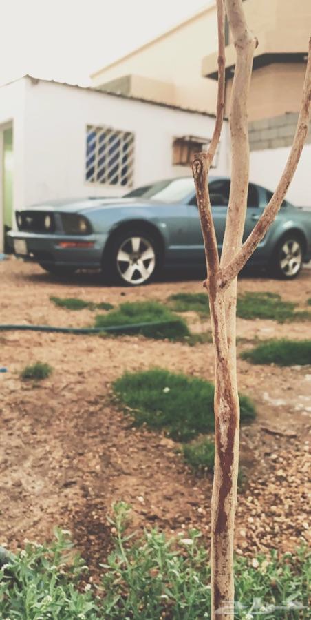 موستنج 2005 للبيع
