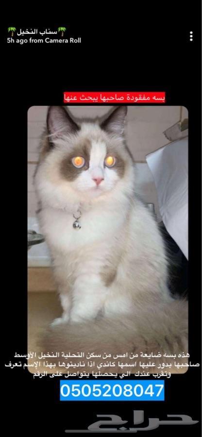 قط مفقود حي النخيل