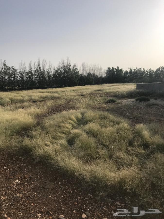 مزرعه وبيت للبيع مساحة 31 الف