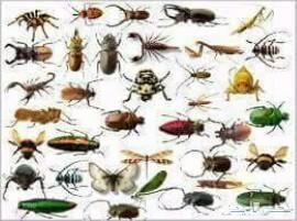 شركة تنظيف بالطايف شقق فلل خزنات مكافحة حشرات