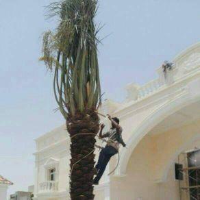 الرياض - السلام عليكم   ل تكريب