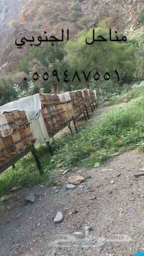 عسل سدر صافي اصلي مضمون