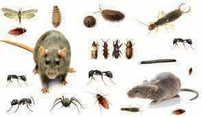 شركة مكافحة حشرات بالشرقيه
