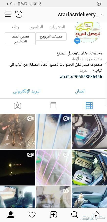 توصيل قطط وكلاب\nجدة_مكة_الطائف_الرياض_الشرقية