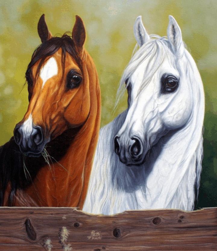 حصان مهر مهره فرس