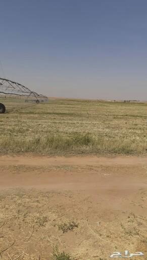 للبيع مزرعه للبيع في ساجر