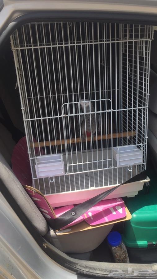 شحن وتوصيل قطط كلاب طيور