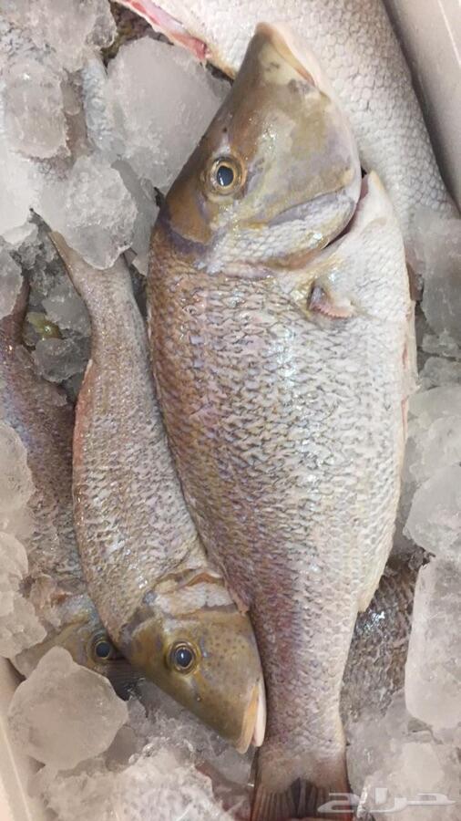 سمك وربيان بلدي طازج وبهارات الاسماك