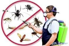 شركة رش البق والنمل الأبيض والصراصر والفأران