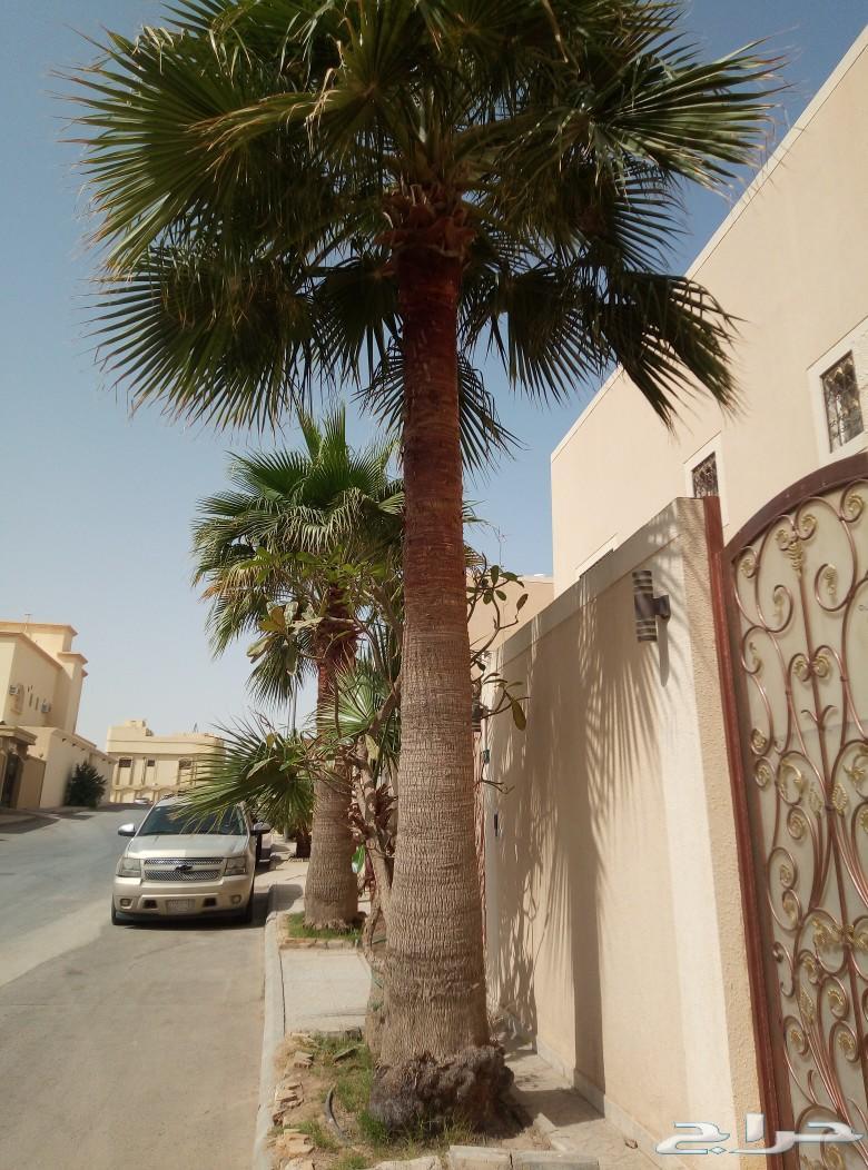ثلاث نخلات واشنطن الموقع الرياض