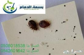 شركة مكافحة حشرات ورش مبيدات
