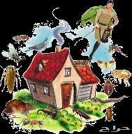 شركة مكافحة حشرات - رش مبيدات بالرياض