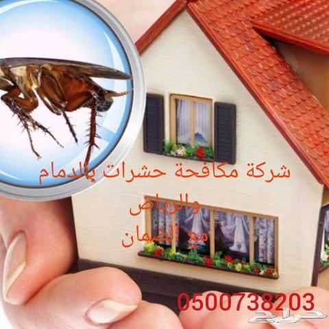 مكافحة حشرات نمل صراصير فئران