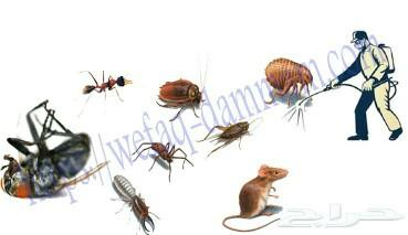 شركة رش مبيدات بالرياض .مكافحة حشرات للصراصير