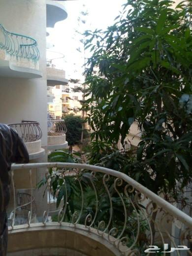 شقه بمصر داخل كومباوند بالإسكندرية العجمى