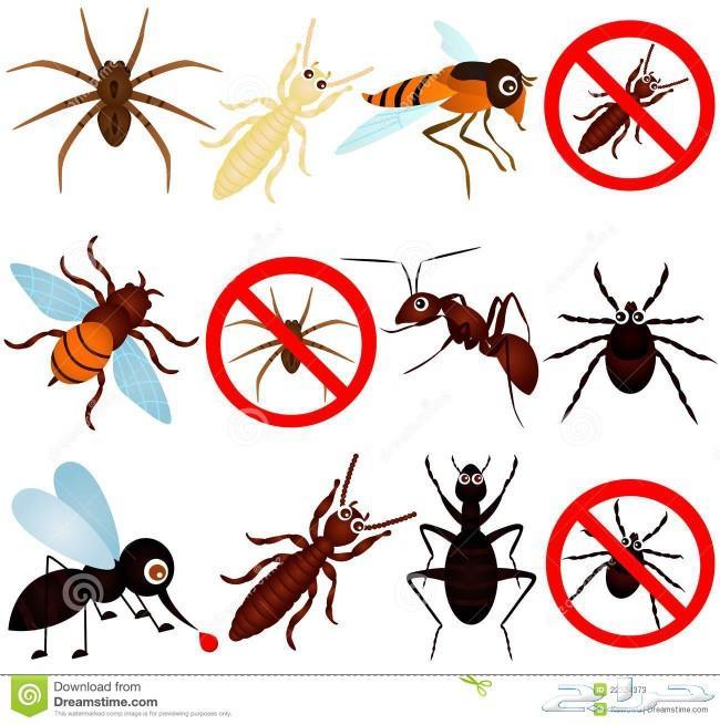 مكافحة الحشرات _ صراصير. نمل. نمل ابيض