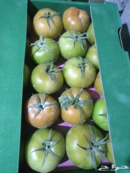 تصديرفواكه وخضروات مصريه تصدر لااوروباوالخليج