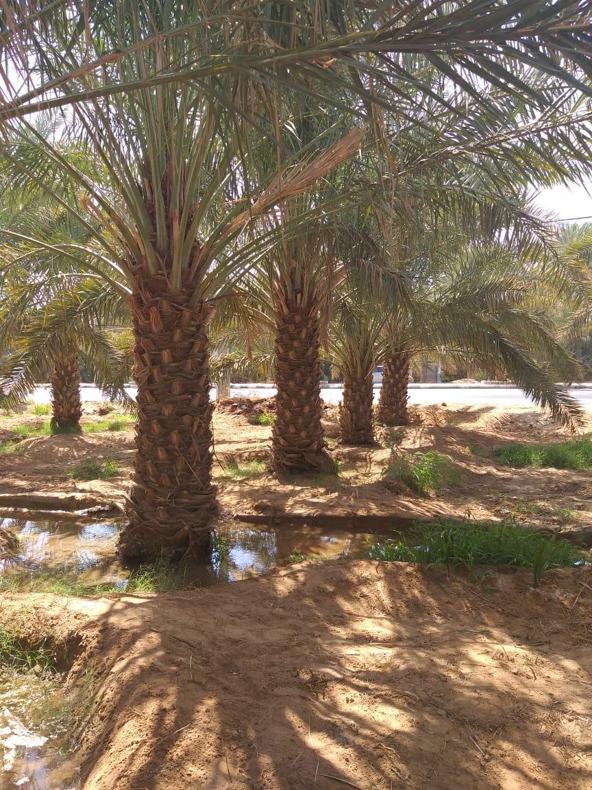 الرياض - نشتغل شبوك مزارع