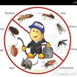 مكافحة لجميع انوع الحشرات بجازان