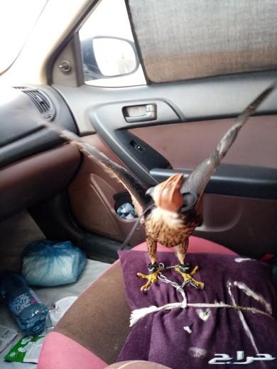 نقل الحيوانات جده المدينة القصيم الرياض الشرق