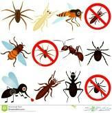 شركة رش مبيدات بالرياض صراصير نمل