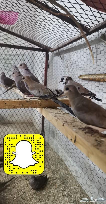 تشكيله مميزه طيور بريه وزينه